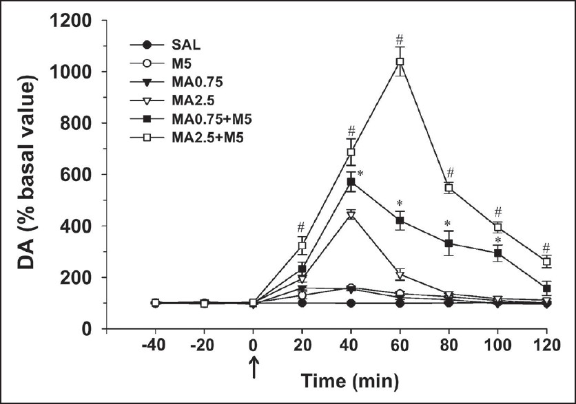 Figure 2: Time course of changes in the release of dopamine in the dialysate of the nucleus accumbens after repeated administration of methamphetamine, morphine or their combination in mice. The regimens of pretreatment with methamphetamine (0.75 mg/kg/day, MA0.75 and 2.5 mg/kg/day, MA2.5), morphine (5 mg/kg/day, M5) or their combination (MA0.75 + M5 and MA2.5 + M5) are described in the methods. The drugs were administered on day 5 as indicated by the arrow. Dialysate levels of dopamine in the nucleus accumbens were measured once every 20 min prior to and after treatment with drugs or saline. The combination of methamphetamine and morphine signifi cantly increased dopamine levels compared with methamphetamine or morphine alone. Each experimental group included six mice. The data are expressed as a percentage (mean ± standard error of mean) of the respective basal values. Repeated measures analysis of variance followed by Dunnett's test was used to analyze the signifi cance of differences between treatments during the 120 min perfusion period in levels of dopamine (MA0.75 + M5 vs. MA0.75, *<i>P</i> < 0.001; MA2.5 + M5 vs. MA2.5, <sup>#</sup><i>P</i> < 0.001)