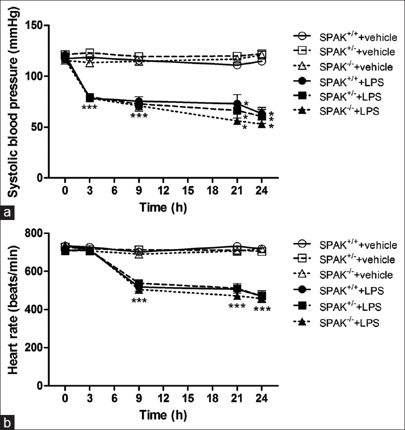 Figure 1: The changes of (a) systolic blood pressure and (b) heart rate during the experimental period in wild-type or SPAK knockout mice treated with lipopolysaccharide. Depicted are SPAK<sup>+/+</sup> mice that received saline (SPAK<sup>+/+</sup> + vehicle, <i>n</i> = 14) or lipopolysaccharide (SPAK<sup>+/+</sup> + lipopolysaccharide, <i>n</i> = 12), SPAK<sup>+/-</sup> mice that received saline (SPAK<sup>+/-</sup> + vehicle, <i>n</i> = 12) or lipopolysaccharide (SPAK<sup>+/-</sup> + lipopolysaccharide, <i>n</i> = 12), and SPAK<sup>-/-</sup> mice that received saline (SPAK<sup>-/-</sup> + vehicle, <i>n</i> = 8) or lipopolysaccharide (SPAK<sup>-/-</sup> + lipopolysaccharide, <i>n</i> = 10). Data are expressed as mean ± standard error of mean *<i>P</i> < 0.05, all versus SPAK<sup>+/+</sup> + vehicle mice; <sup>#</sup><i>P</i> < 0.05, without versus with SPAK in lipopolysaccharide mice. SPAK = STE20/SPS1-realted proline/alanine-rich kinase